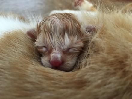 Kitten3a